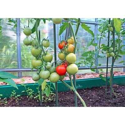 Полудетерминантные томаты семена